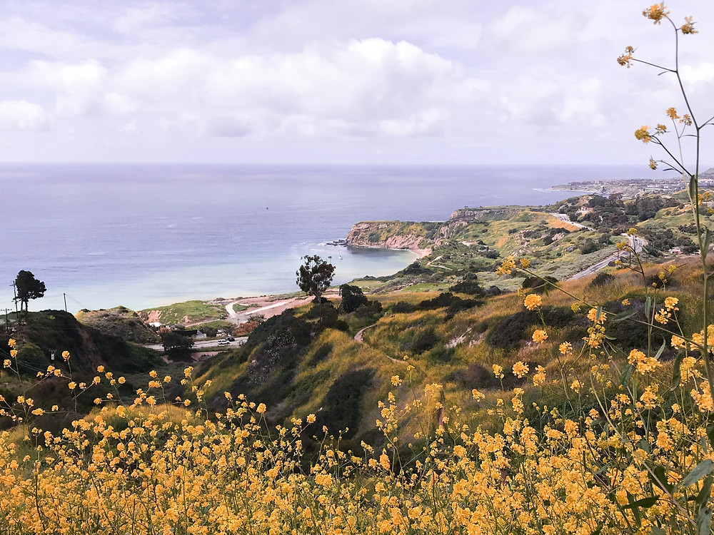picture of ocean and hills with flowers