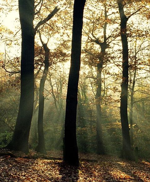 woodslands.jpeg