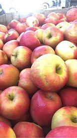 Yonder Fruit Farms