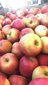 Yonder Fruit Farm
