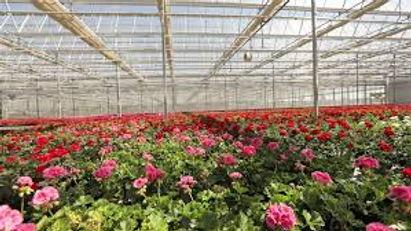 Spiaks Greenhouse