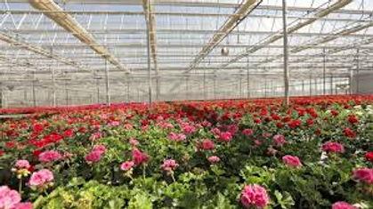 Spiak's Greenhouses