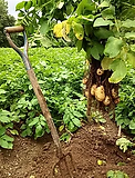 staron_farm.png