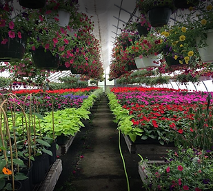 Wahconah Street Greenhouses