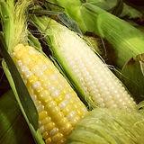 KLEINKES FARM.jpg