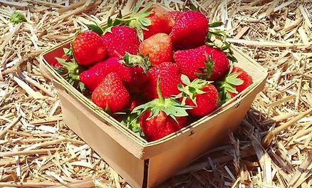 The Chatham Berry Farm