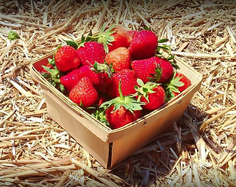 Chathan Berry Farm