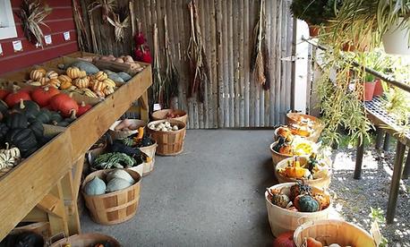 Hand Melon Farm