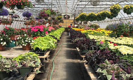 Tranka & Sons Florist