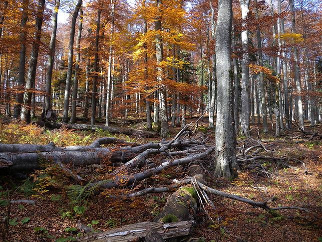 krokar primeval forest