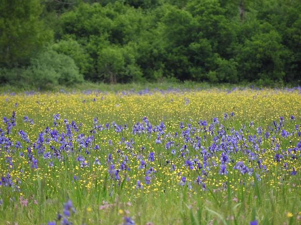 wet meadow slovenia