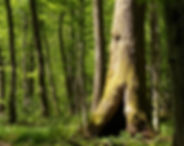 krakovski gozd slovenia