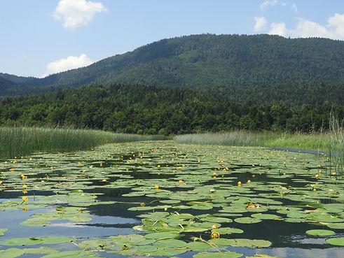 lake_cerknica