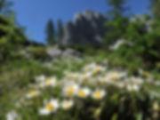 Alps Slovenia