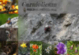 new_header_carniolicum_nov_2018_1000_sma