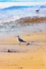 Duxbury Beach-3.jpg