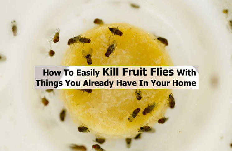 6 Ways to Kill Fruit Flies | laundryservices