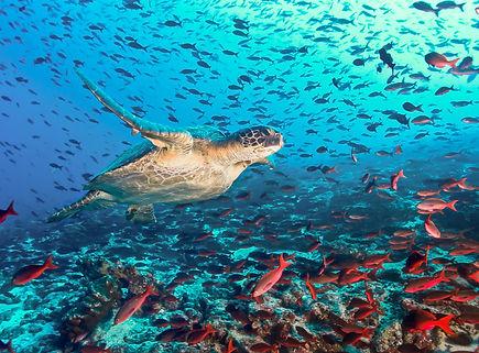 Galapagos Under the Sea.jpg