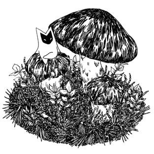 Tuoksuvalmuska (Matsutake mushroom)