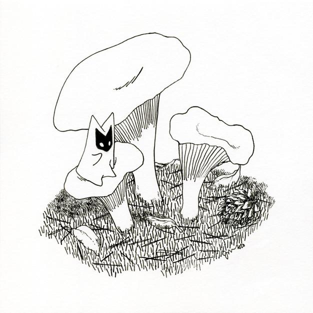 Kantarelli (Chanterelle mushroom)
