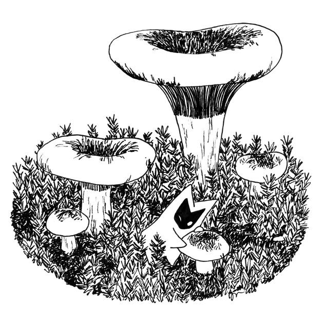Pulkkosieni (Brown roll-rim mushroom)