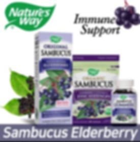 Sambucus group pic.png