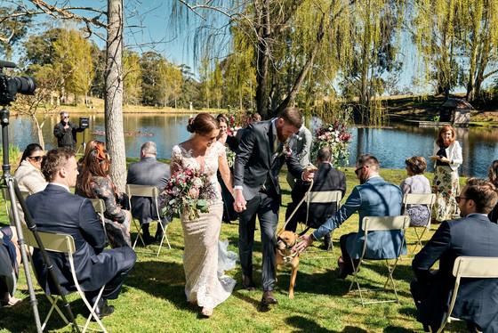 Pets at Weddings.jpg