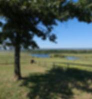 Back yard view 1.jpg