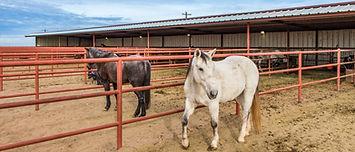 Castro County, Texas Land Auction
