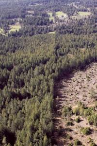 Engaging timber1273603554_Spring_2010_EPIC_KD