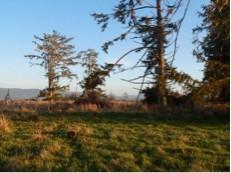 Photo 15. Porcupine in Sitka spruce riparian habitat at TDSP.