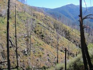 Panther Post-Salvage Logging