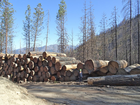Leave A Legacy! Westside – Old Growth and Implementation