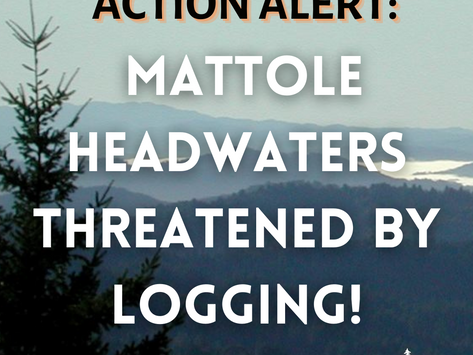 Action Alert: Mattole Headwaters Threatened By Logging!