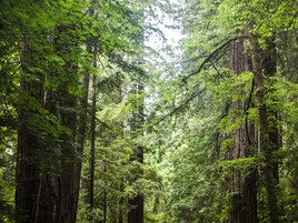 New Information On Richardson Grove Project