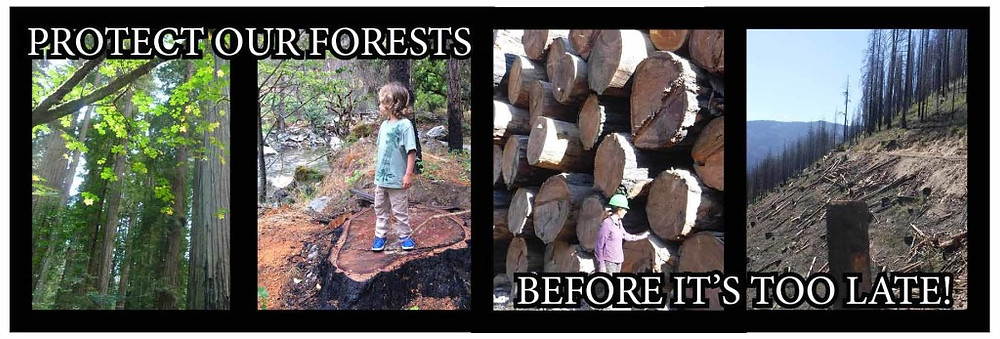 BANNERPROTECT OUR FORESTS BEFORE ITS TOO LATE
