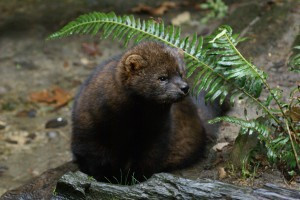 The Endangered Species Acts—Tools of the Trade for Protecting Species Diversity and Forest Health