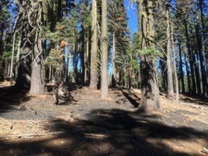 Horse Creek Project: Losing Taxpayer Money to Harm Spotted Owls