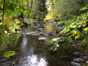 East Fork Salmon River A.Shelton