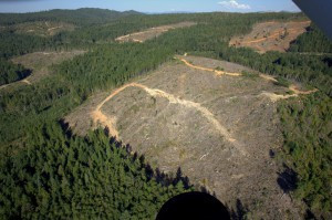 Aerial view of Green Diamond clearcut.