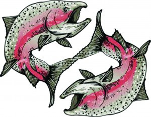 salmon pisces transparent bkgrnd