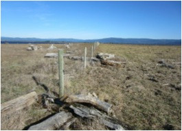 Tolowa Dunes State Park Fence Mapping, Removal and Restoration  Project Report