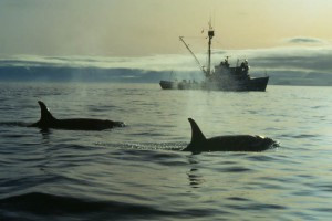 Comments Submitted to Navy Opposing Harm to Marine Mammals