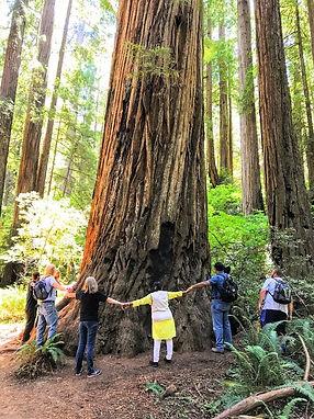 redwood-hikes-RD.jpg