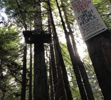 An Update From The Campaign To Save Jackson Demonstration State Forest