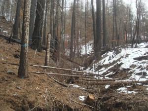 Panther Pre-Salvage Logging