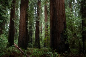 Celebrate Earth Day in Richardson Grove State Park!