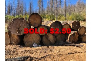 The Horrific Tale of Timber Targets