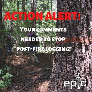 Action Alert: Say No To Mendocino Logging of Fragile Post-Fire Forests!
