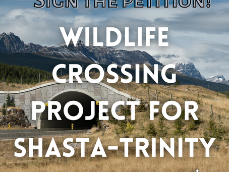 Sign the Petition: Protect Wildlife Connectivity with the Shasta-Trinity Wildlife Crossing Project!
